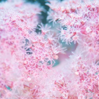 ピンクのポリプを持つ水生動物の写真