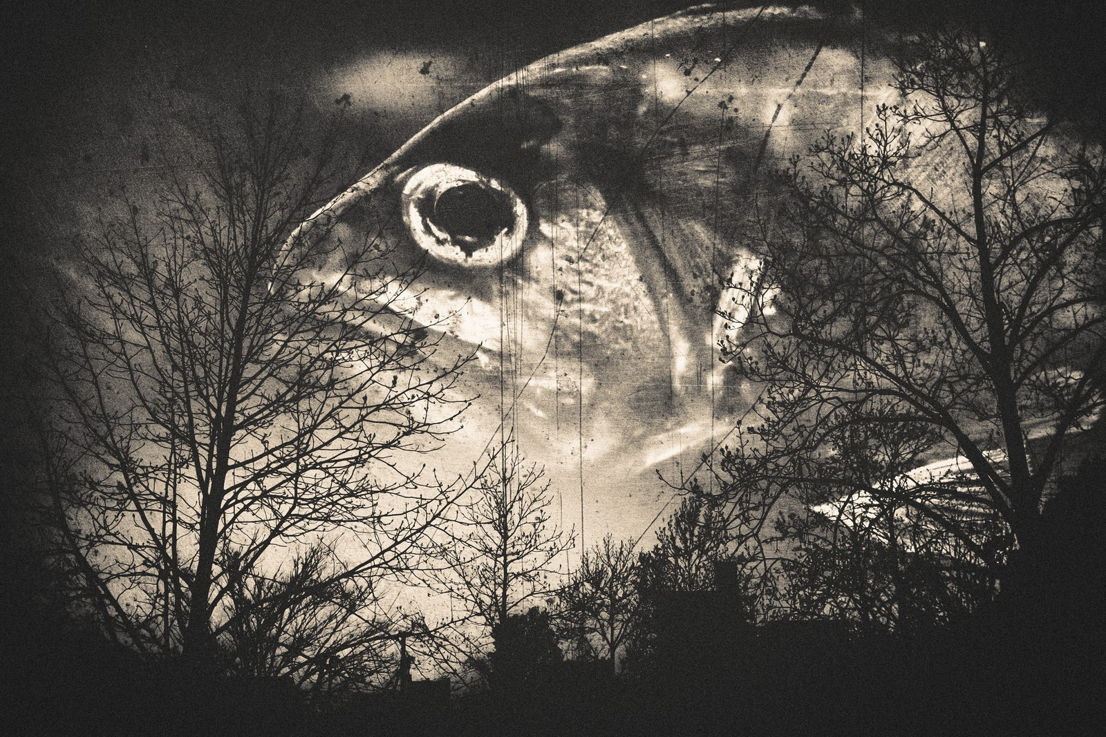 「森の番人(フォトモンタージュ)」の写真