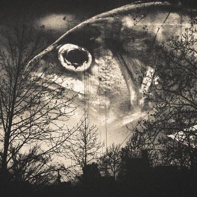 「森の番人(フォトモンタージュ)」の写真素材