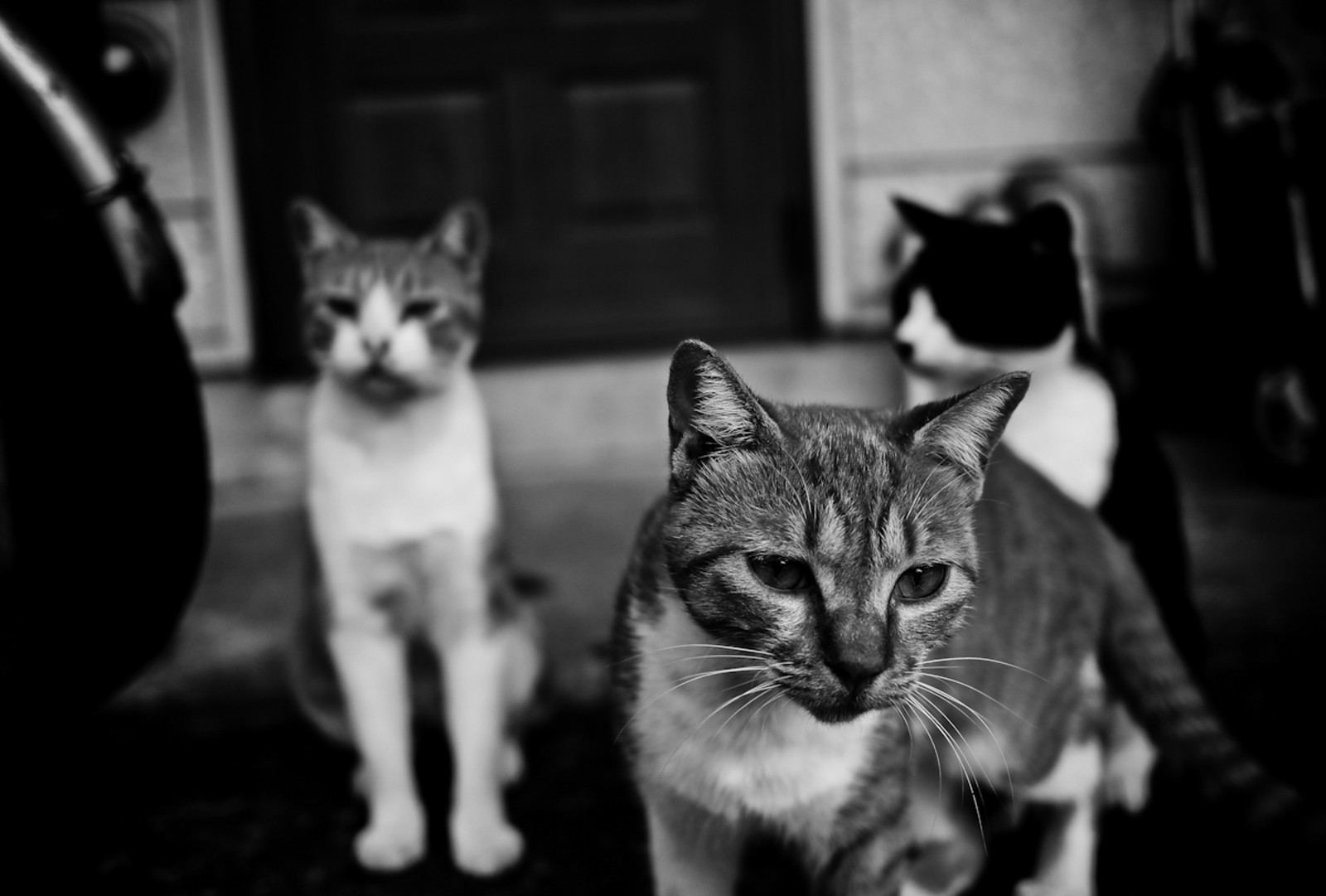 「とりあえず集まった猫たち」の写真