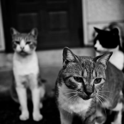 「とりあえず集まった猫たち」の写真素材