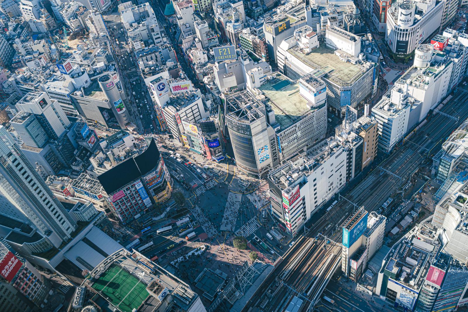 「渋谷スカイから見下ろすスクランブル交差点の様子」の写真