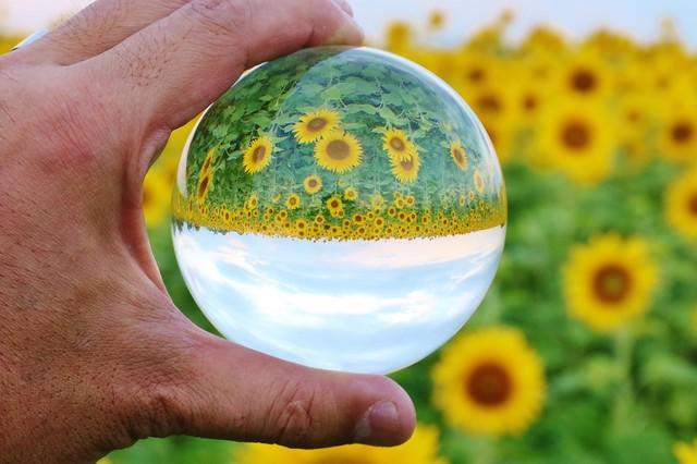 ひまわり畑を水晶玉で反転の写真