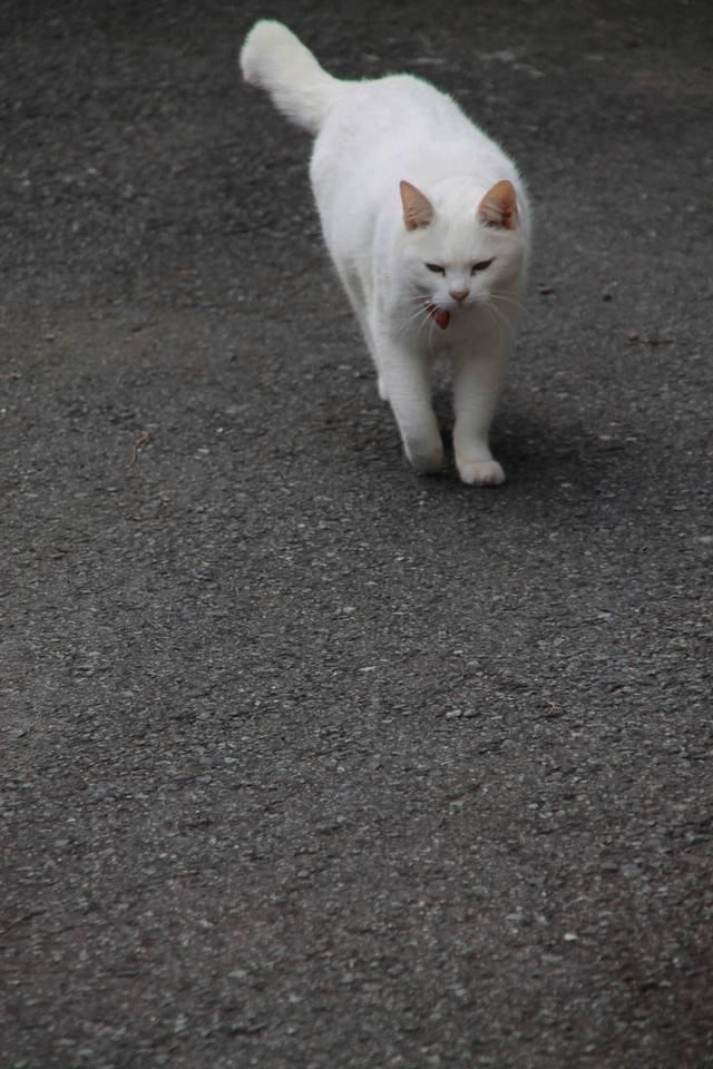 そろりと近づいてくる猫ちゃんの写真