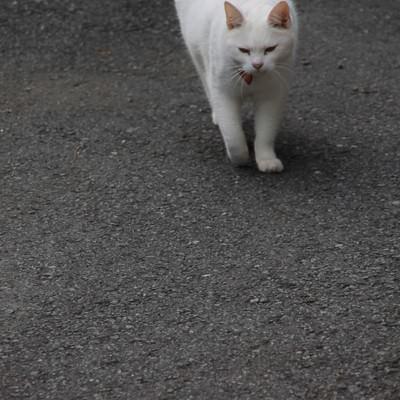 「そろりと近づいてくる猫ちゃん」の写真素材