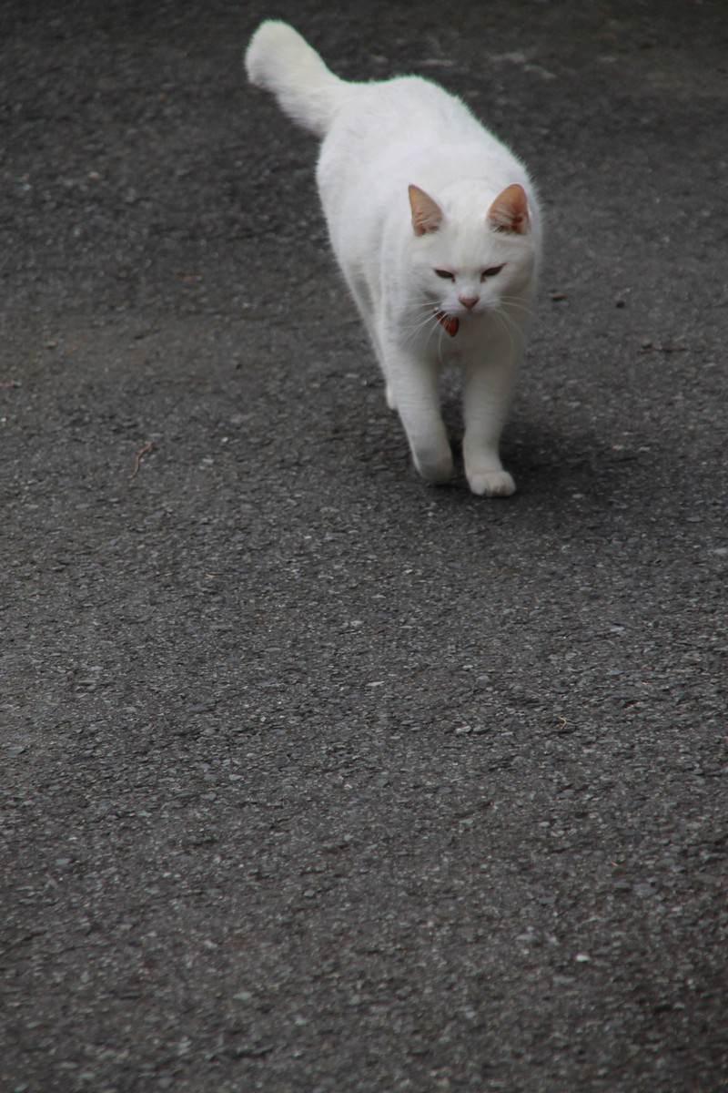 「そろりと近づいてくる猫ちゃん」の写真