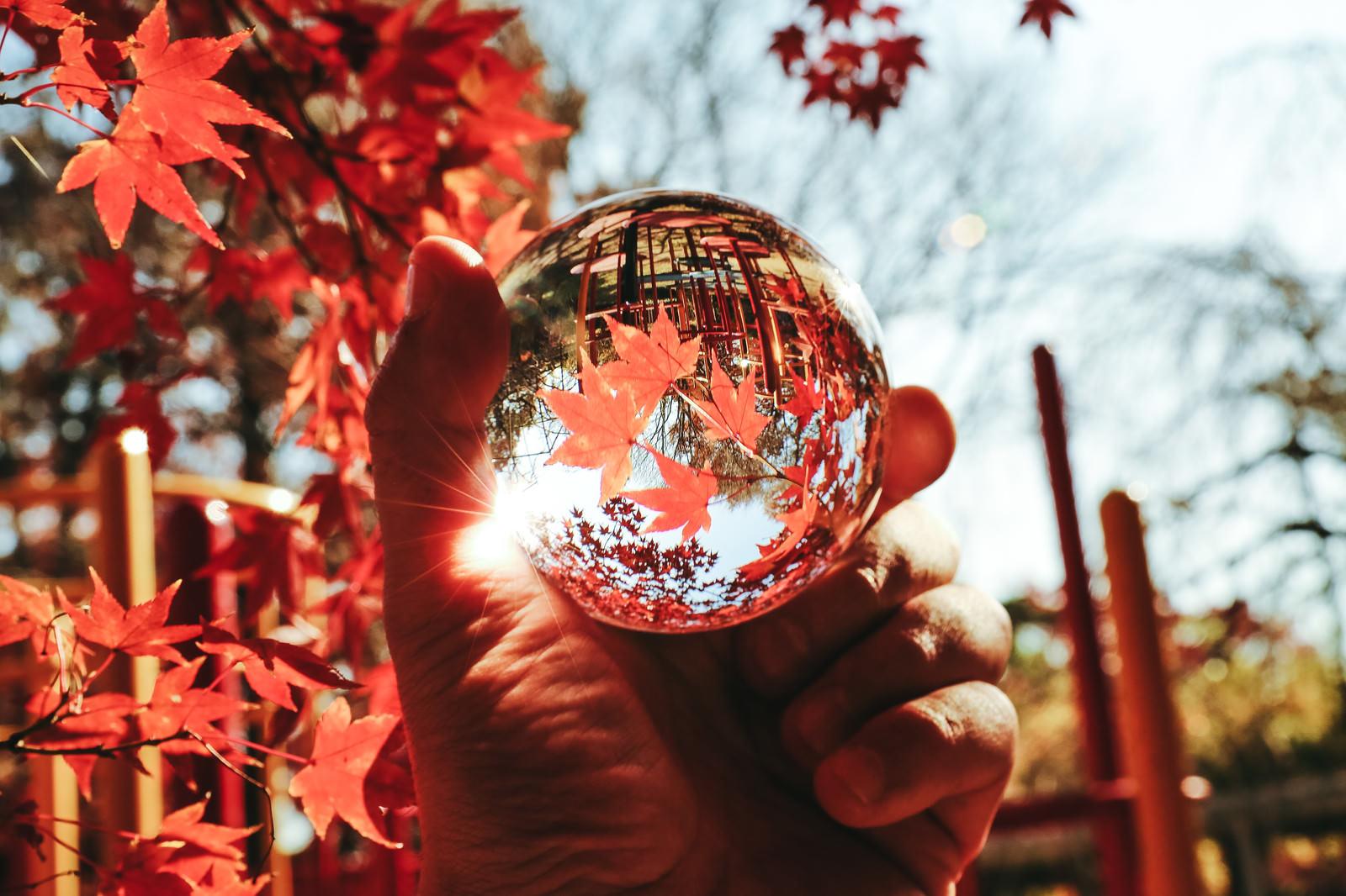 「水晶球越しの紅葉の世界」の写真