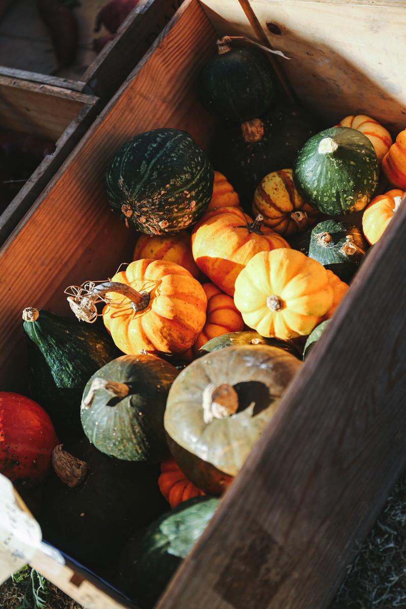 「木箱に入ったかぼちゃ」の写真