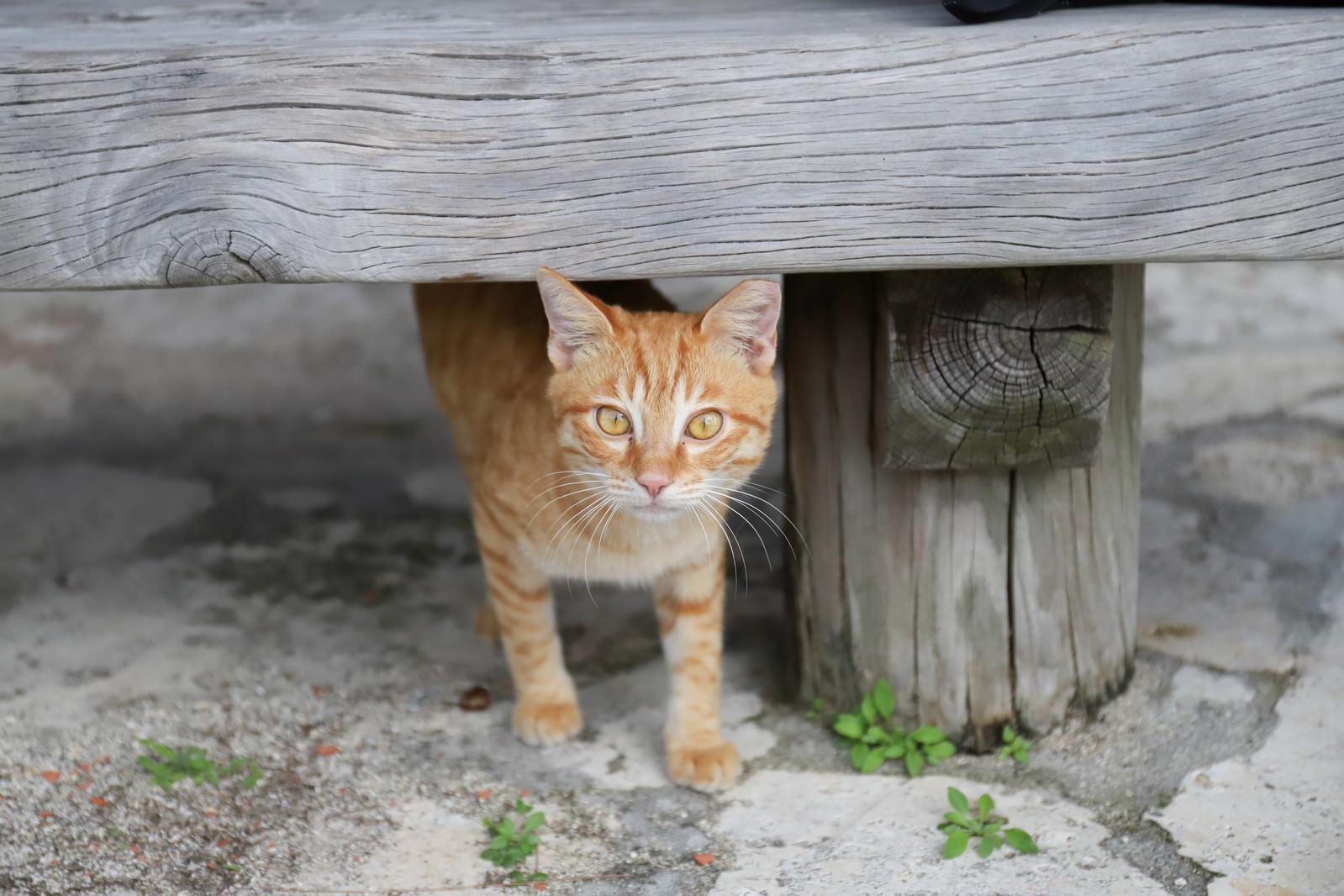 「ベンチの下から様子をうかがう子猫」の写真