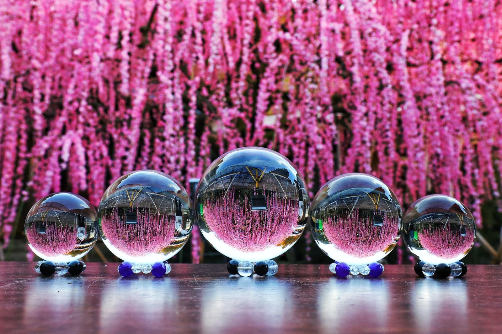 「枝垂れ梅と並ぶガラス玉」の写真