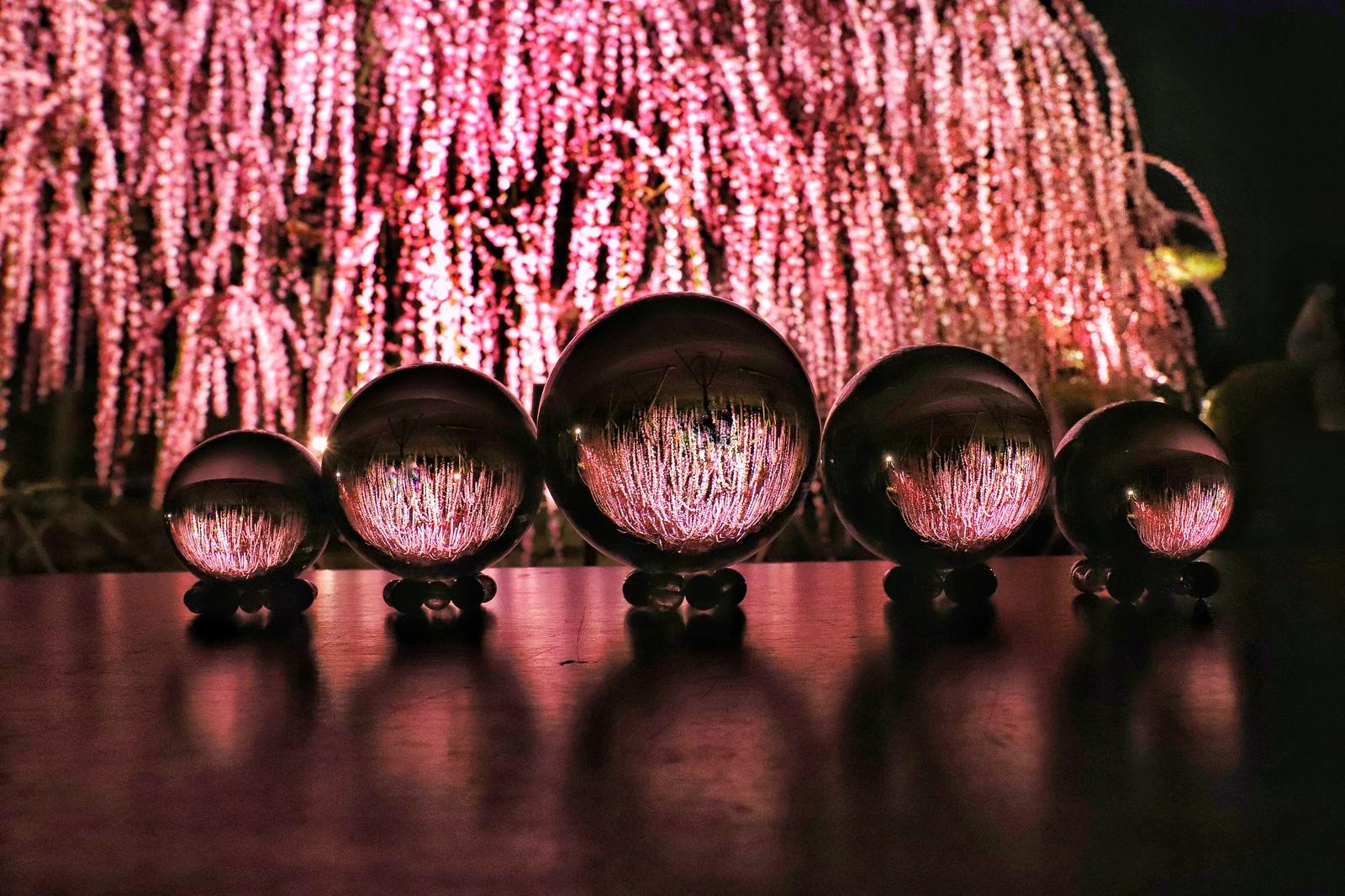 「ライトアップされたしだれ梅と水晶玉」の写真