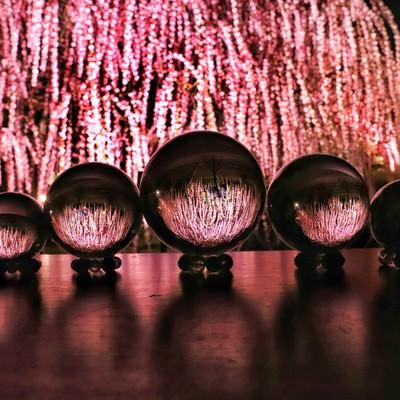 ライトアップされたしだれ梅と水晶玉の写真