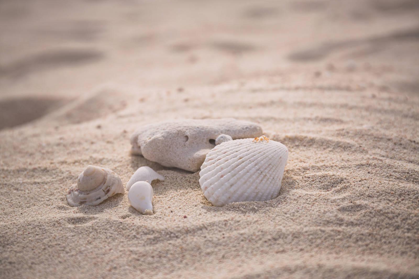「砂浜に落ちていた貝殻」の写真