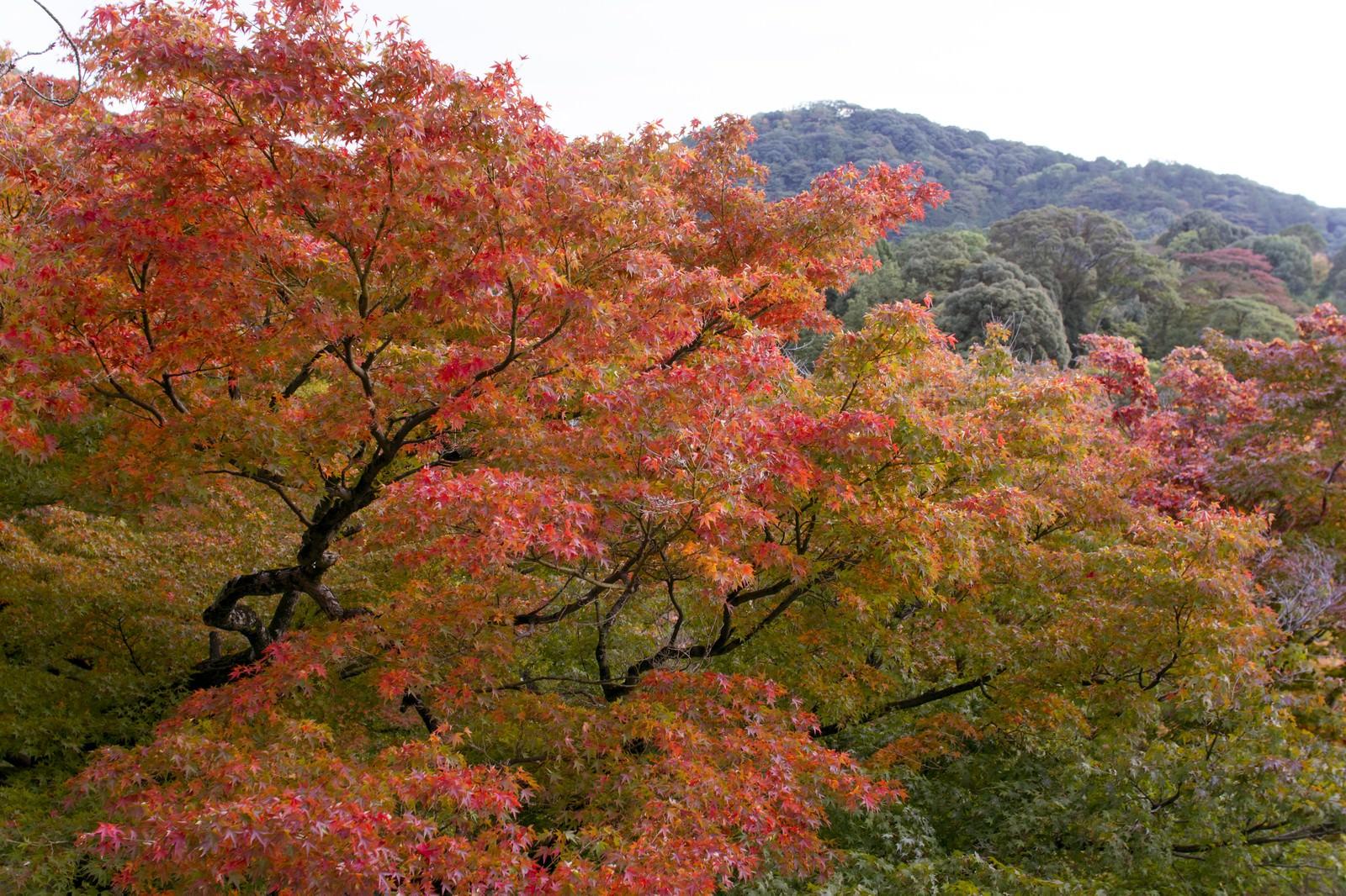 「色づき始める木々」の写真