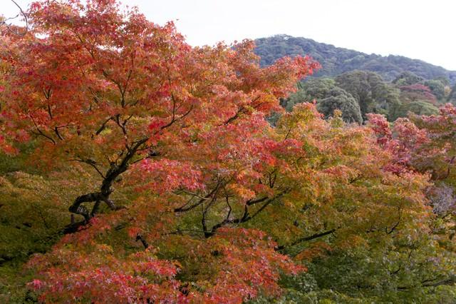 色づき始める木々の写真