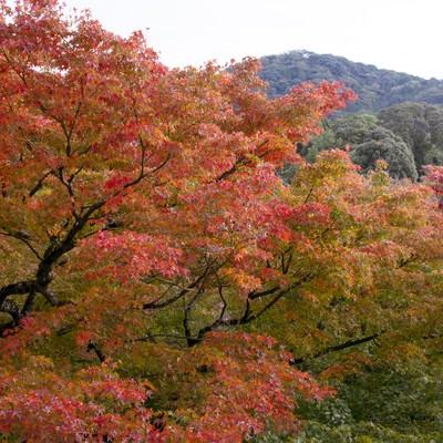 「色づき始める木々」の写真素材