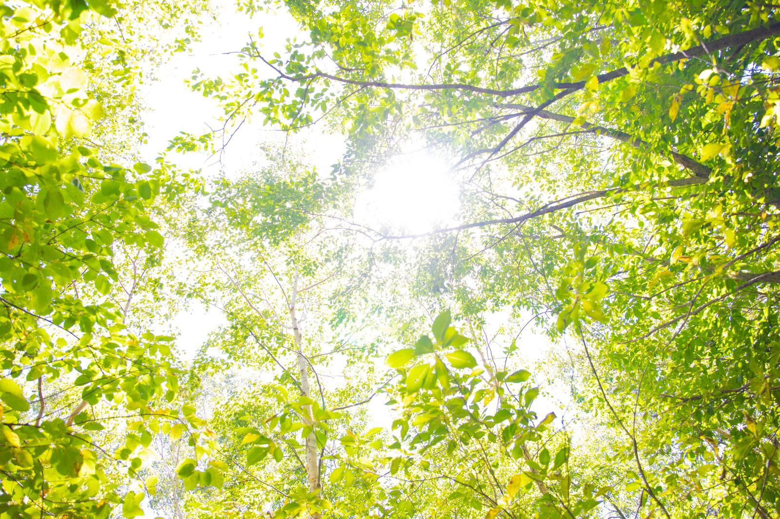 「新緑の木漏れ日」