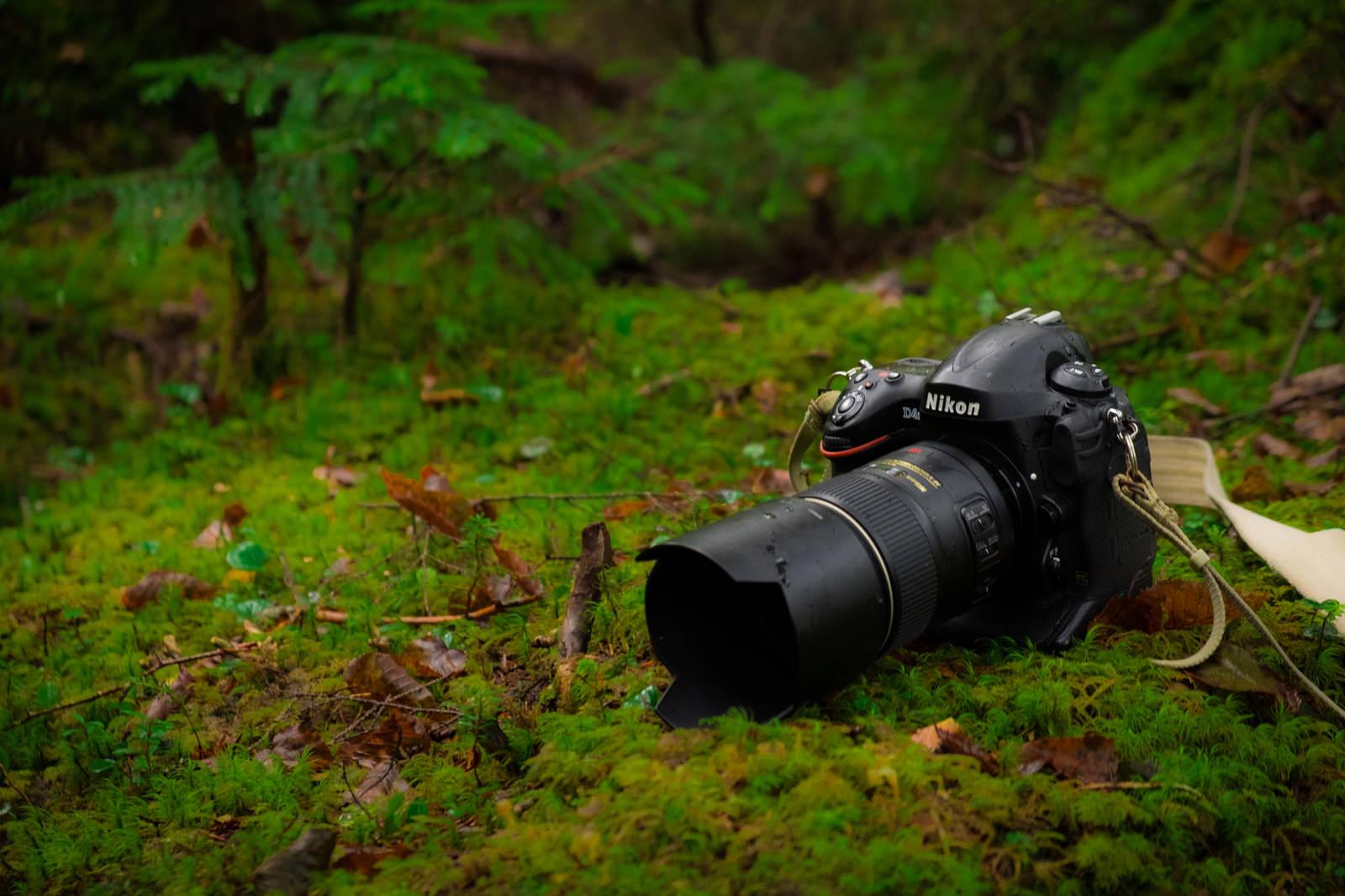 「ネイチャー撮影するフルサイズ一眼レフカメラ」の写真