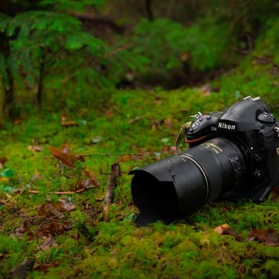 ネイチャー撮影するフルサイズ一眼レフカメラの写真