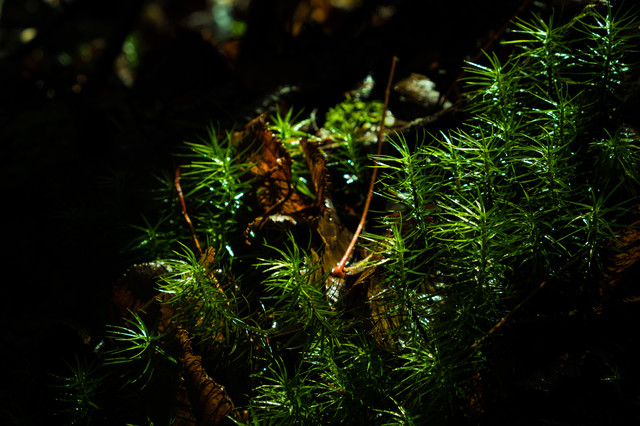 苔に差し込む光(白駒)の写真