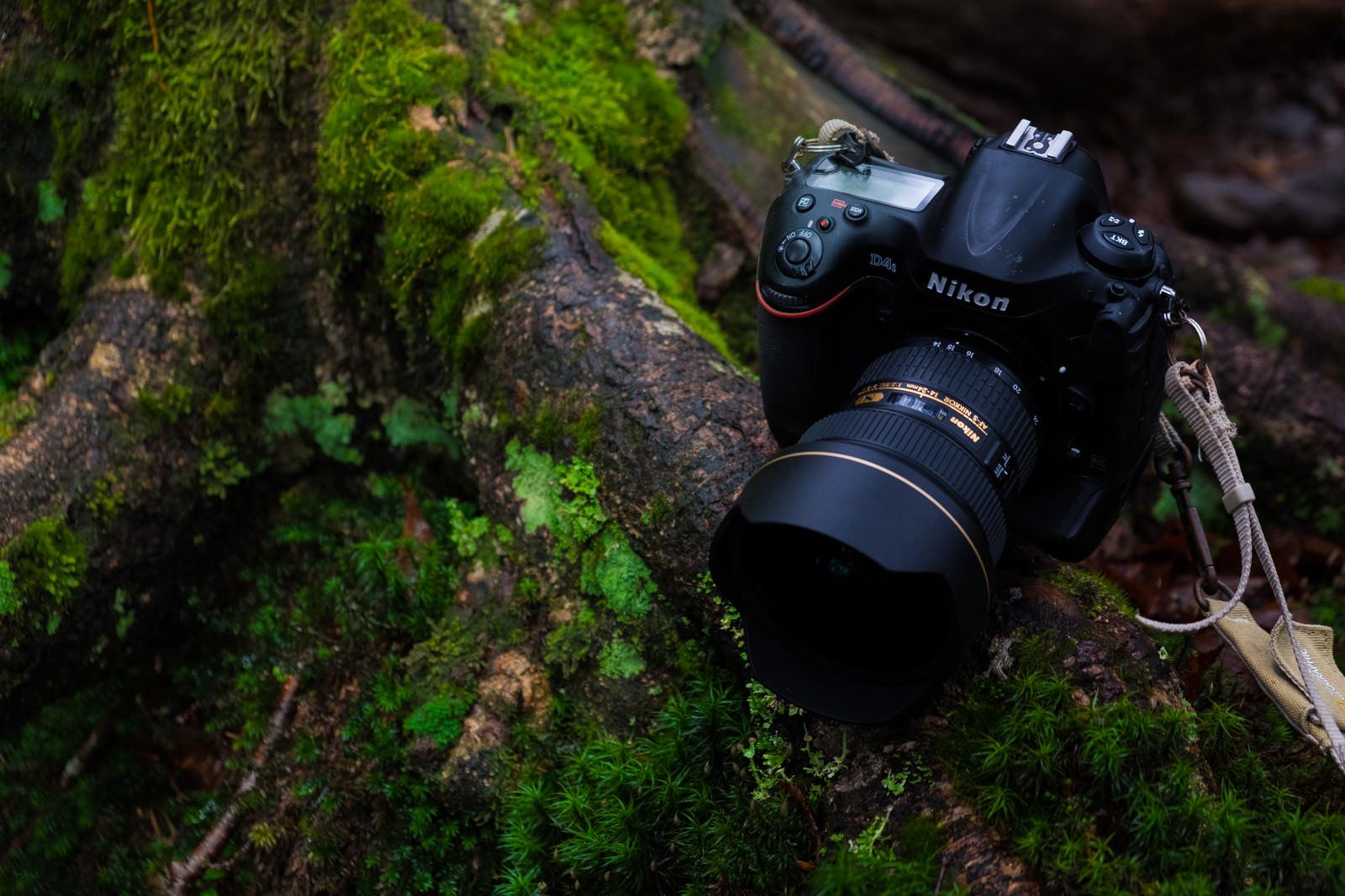「原生林を撮影する一眼レフカメラ原生林を撮影する一眼レフカメラ」のフリー写真素材を拡大