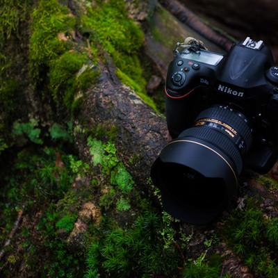 原生林を撮影する一眼レフカメラの写真