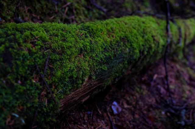 コケの森(白駒)の写真
