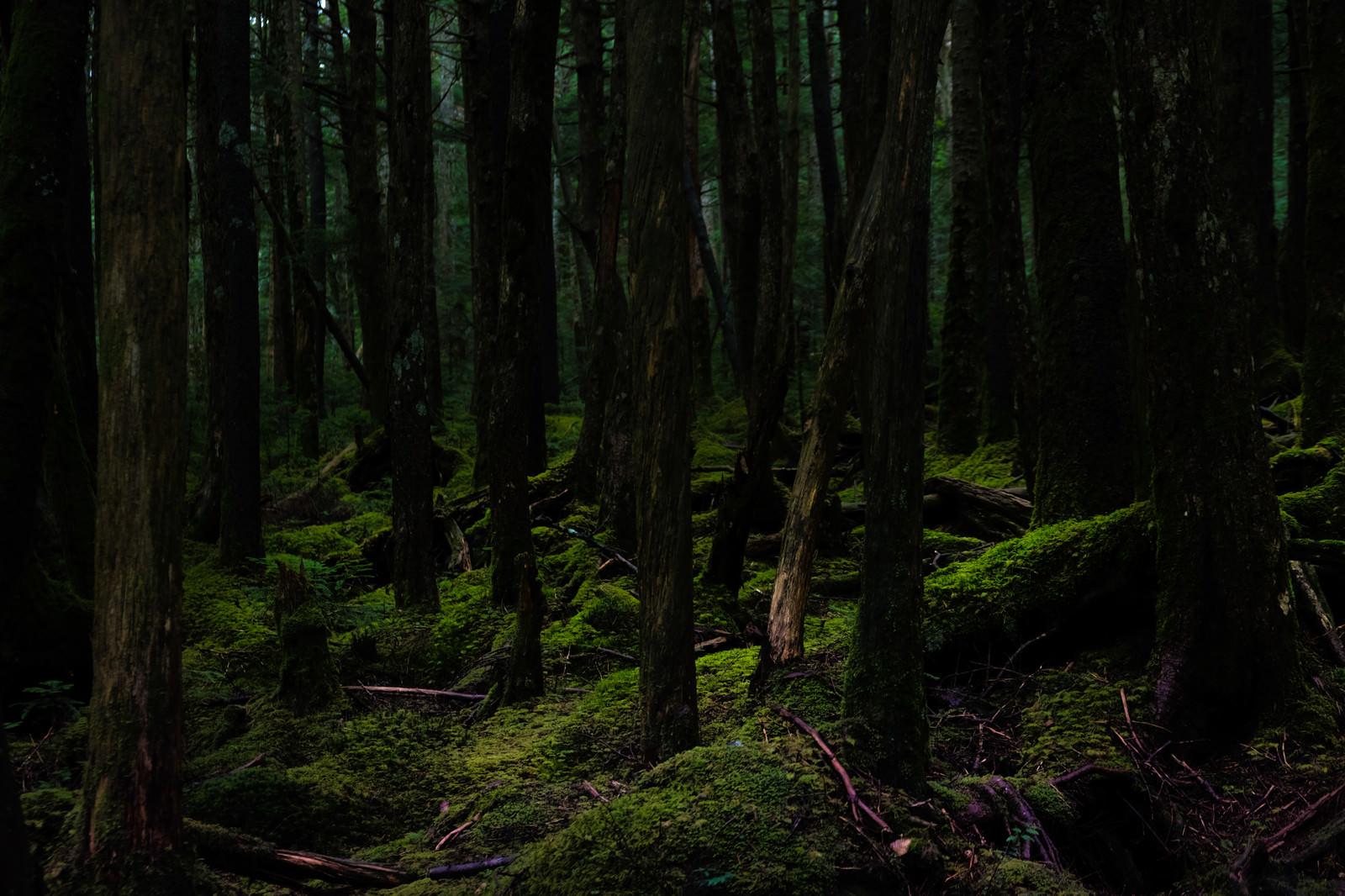 「静寂な白駒の原生林 | 写真の無料素材・フリー素材 - ぱくたそ」の写真