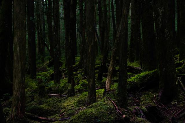 静寂な白駒の原生林の写真