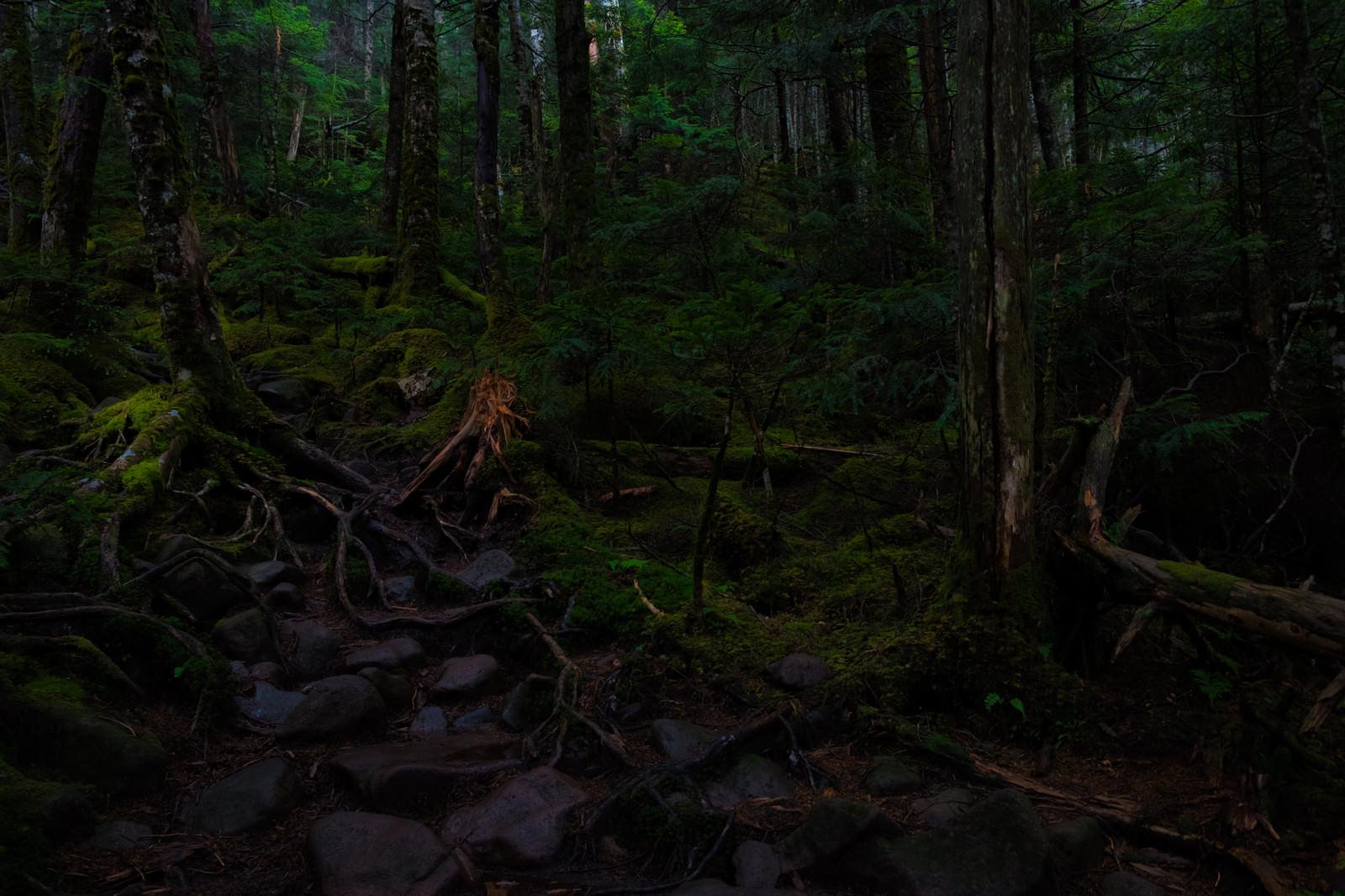 「一面に広がる苔と原生林」の写真
