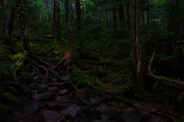 一面に広がる苔と原生林の写真