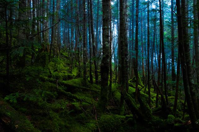 神秘的な白駒の原生林の写真