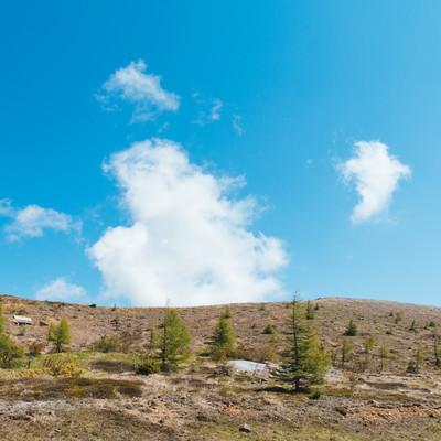 くさきがポツポツ生える白根山の写真