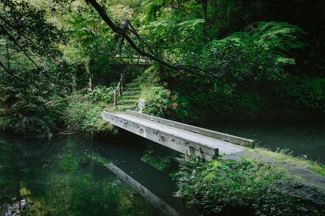 森の中の小さな橋の写真