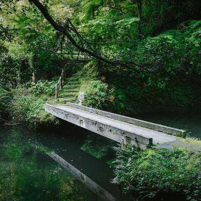 「森の中の小さな橋」の写真素材