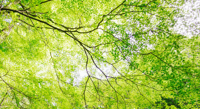 新緑のイメージの写真