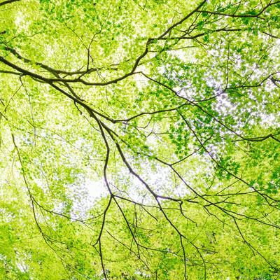 「新緑のイメージ」の写真素材