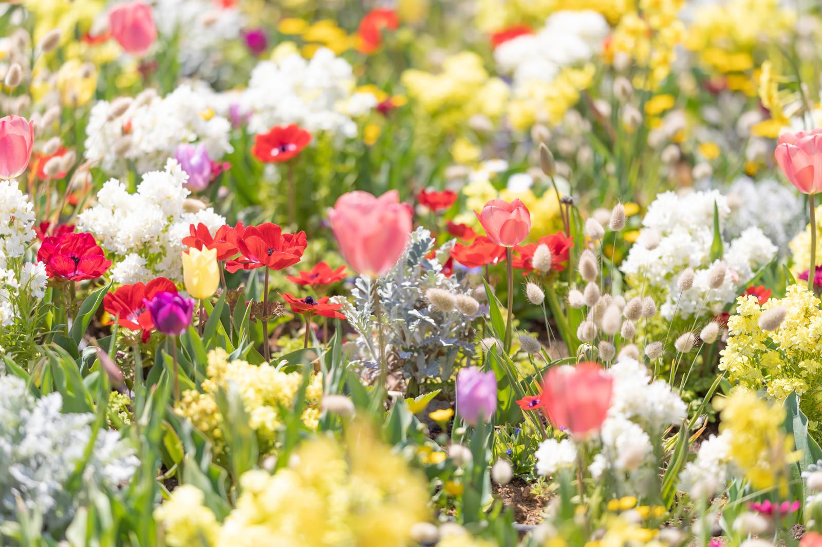 「春爛漫の様子」の写真