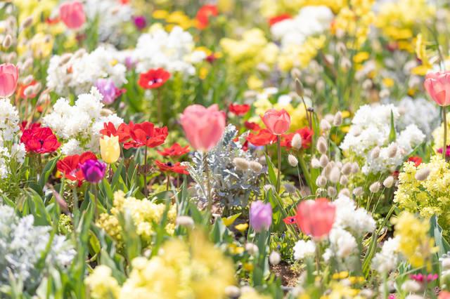 春爛漫の様子の写真