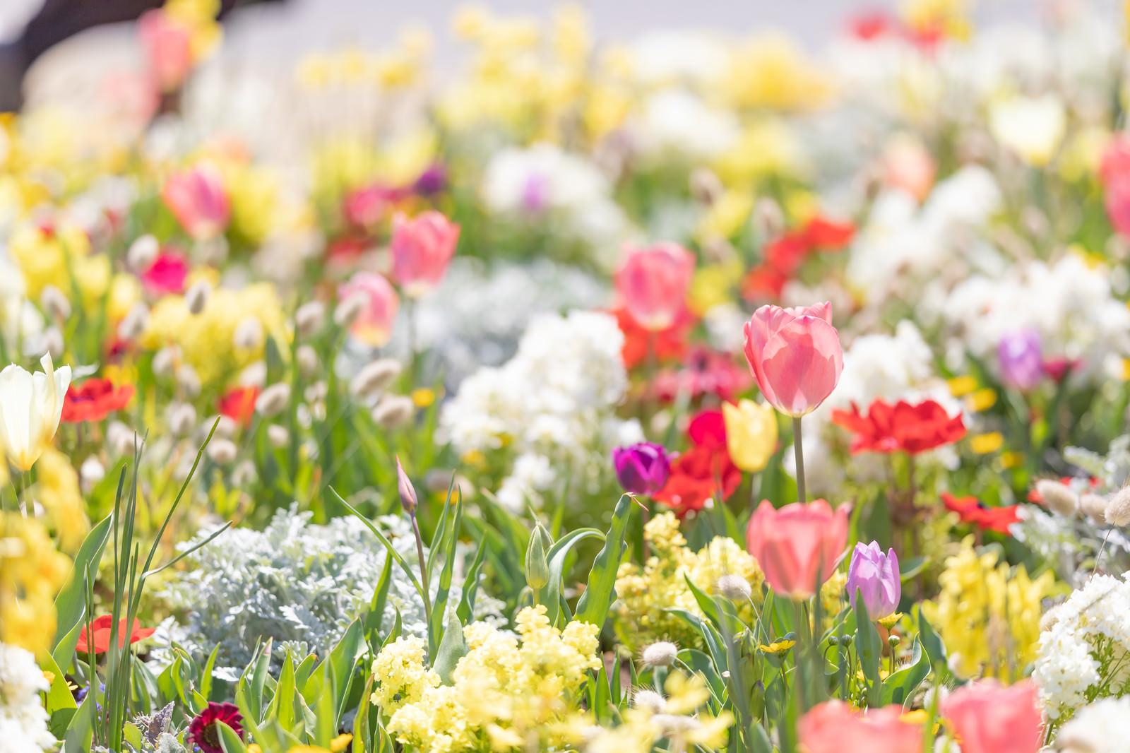 「春の訪れと満開のお花」の写真
