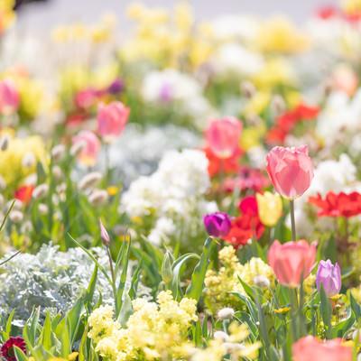 春の訪れと満開のお花の写真