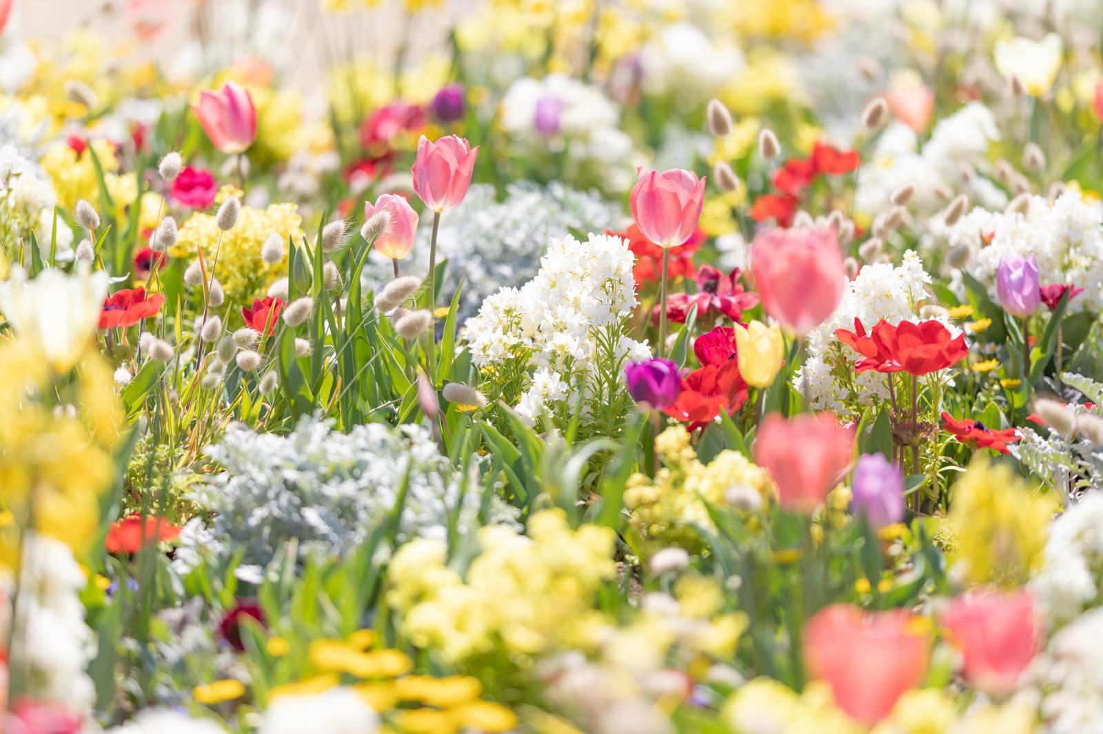 「春爛漫の花壇」の写真
