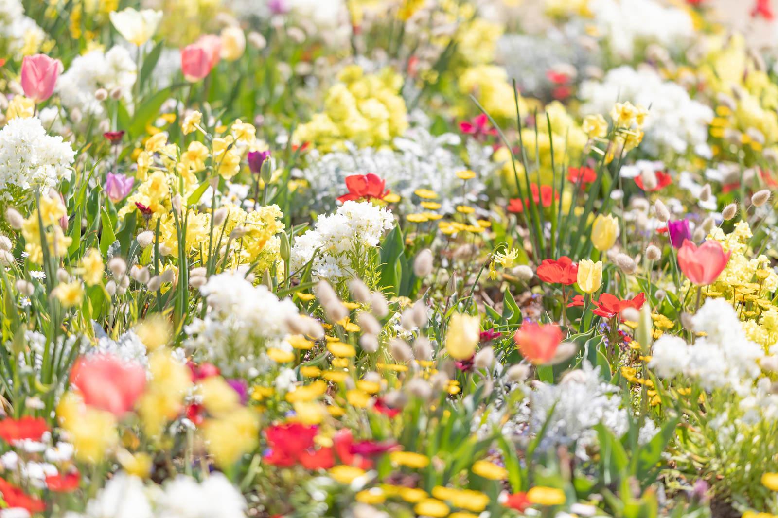 「春花」の写真
