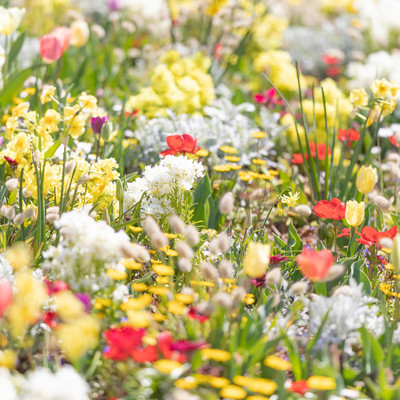 春花の写真