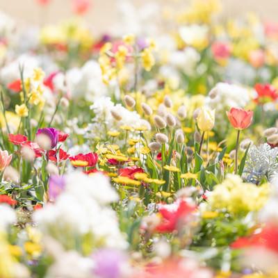 春に咲くガーデニングの様子の写真