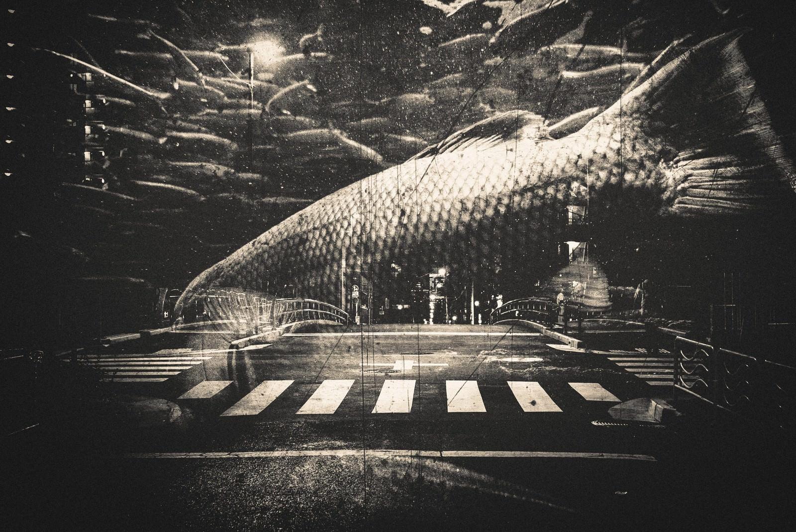 「都会を泳ぐ魚(フォトモンタージュ)都会を泳ぐ魚(フォトモンタージュ)」のフリー写真素材を拡大