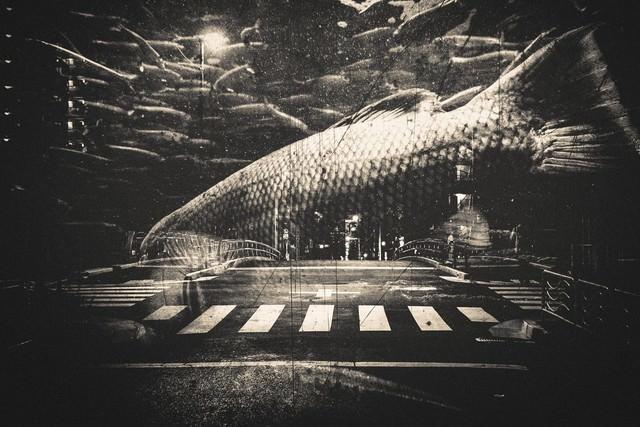 都会を泳ぐ魚(フォトモンタージュ)の写真