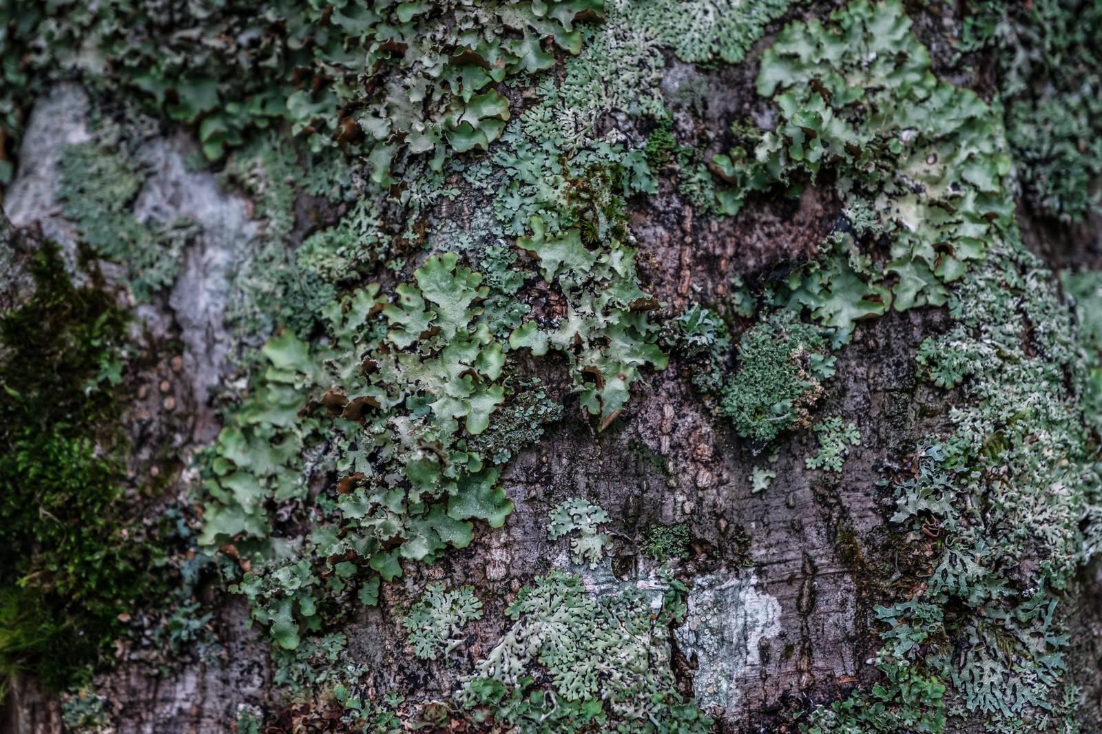 「木に生えた苔木に生えた苔」のフリー写真素材を拡大