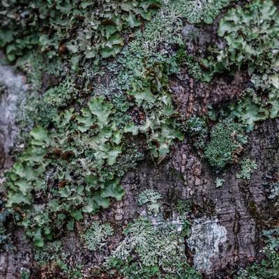 木に生えた苔の写真