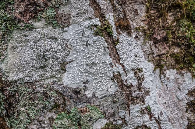 白く乾燥した木の表皮の写真